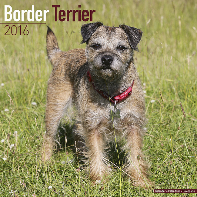 calendrier 2016 border terrier. Black Bedroom Furniture Sets. Home Design Ideas