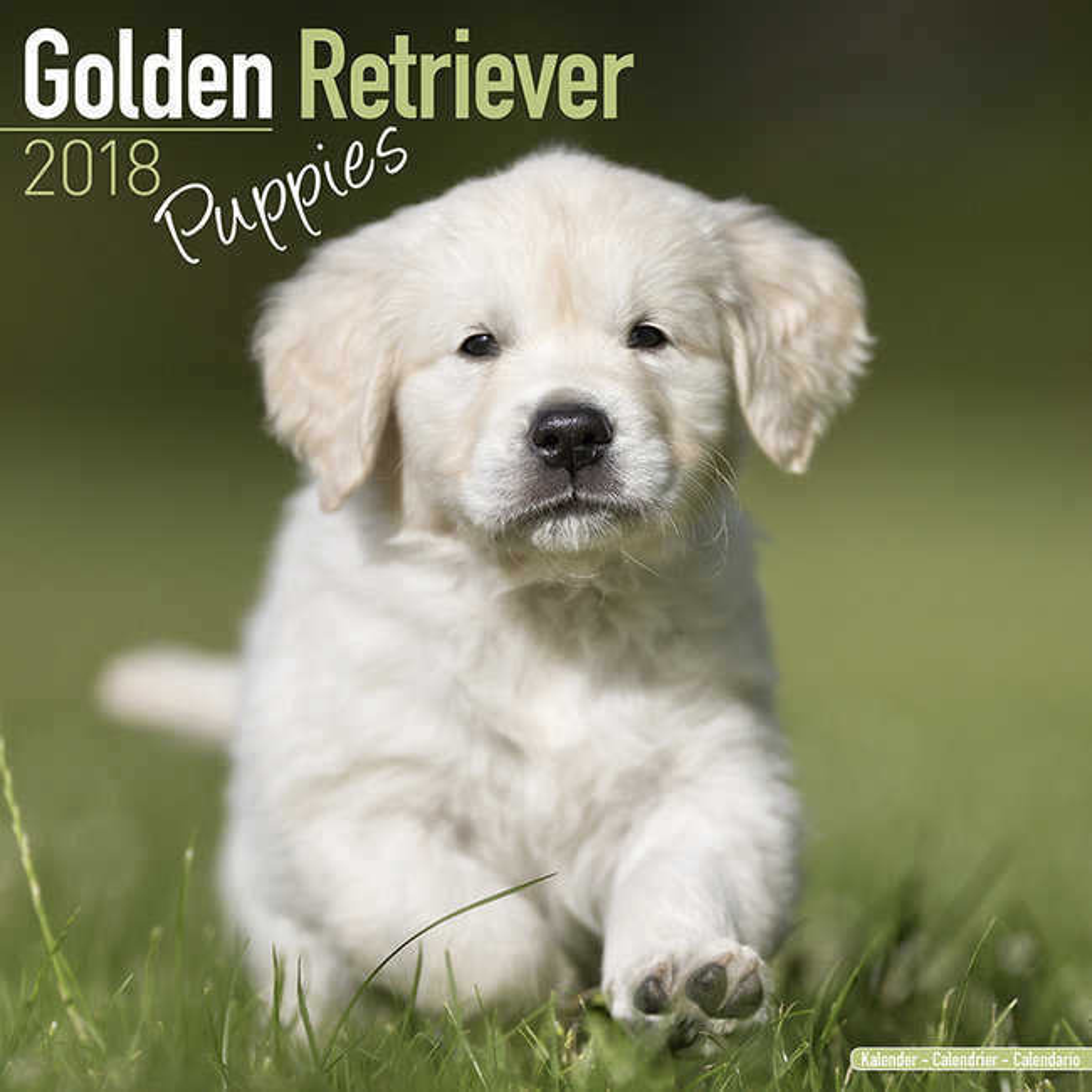 Calendrier 2018 Golden retriever chiot