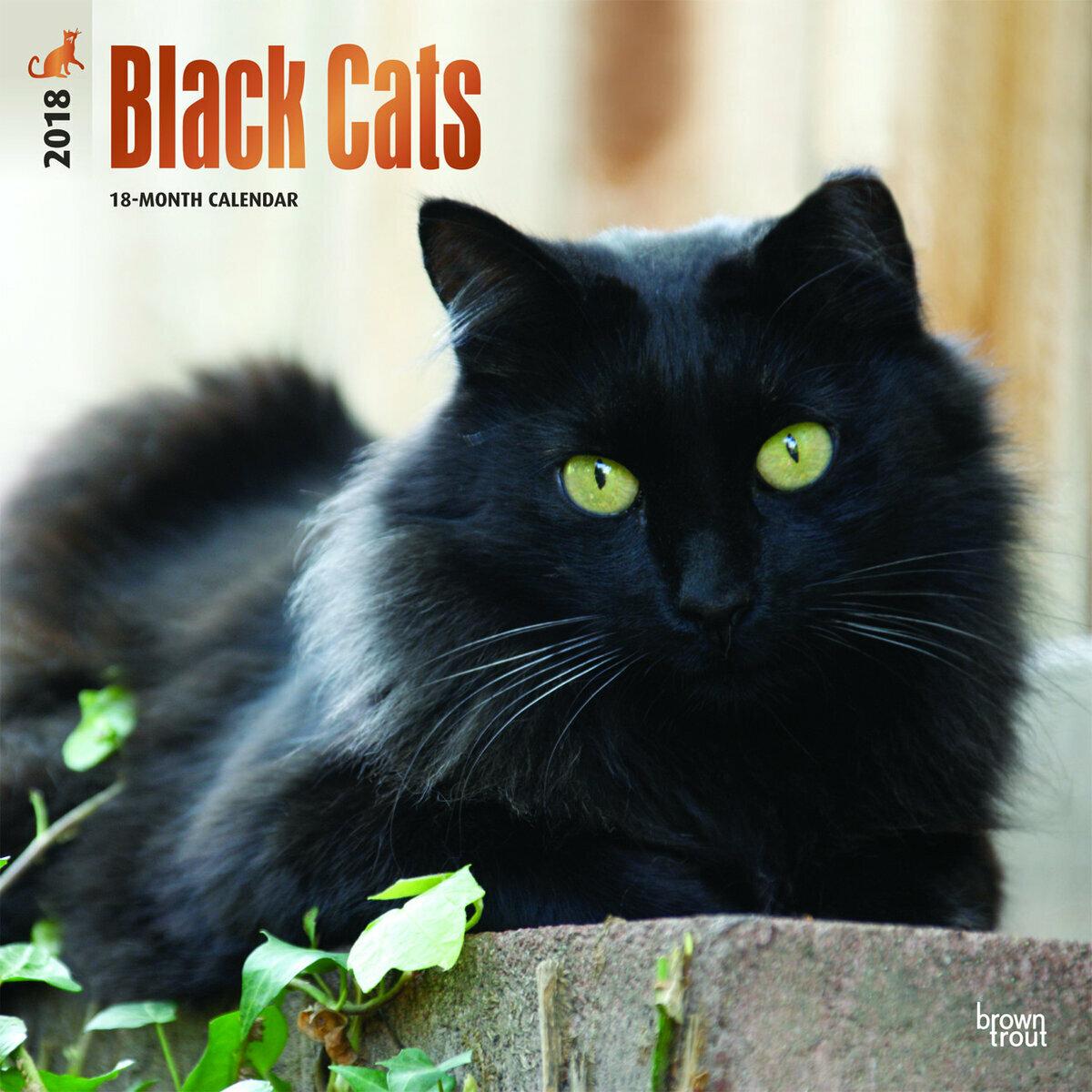 Super calendrier chat noir 2018 HJ98