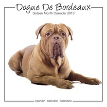 Calendrier 2013 Dogue de bordeaux studio