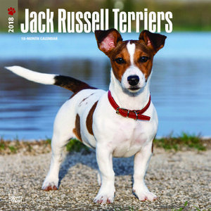 Calendrier 2018 Jack Russell