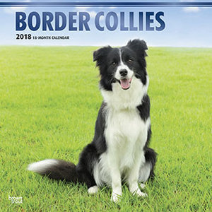 Calendrier 2018 Border Collie