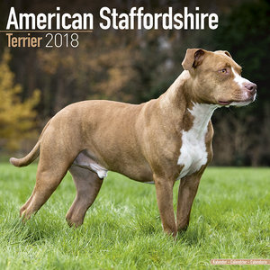 Calendrier 2018 American staffordshire terrier