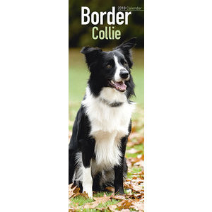 Calendrier 2018 Border collie slim