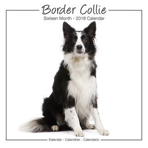 Calendrier 2018 Border collie studio