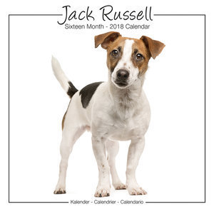 Calendrier 2018 Jack russell terrier studio