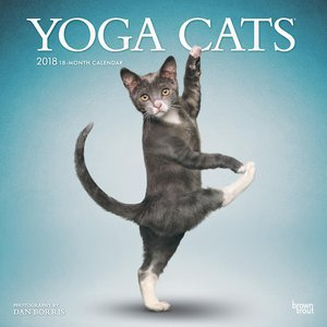 Calendrier 2018 chats yoga