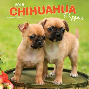 Calendrier 2018 Chihuahua chiot