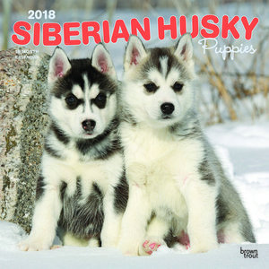 Calendrier 2018 Siberian Husky chiot