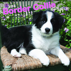 Calendrier 2018 Border collie chiot