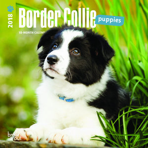 Mini calendrier 2018 Border collie chiot