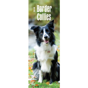 Calendrier 2018 Border collie slim (bt)