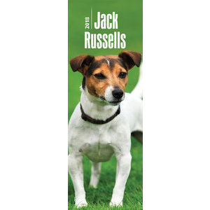 Calendrier 2018 Jack russell slim (bt)