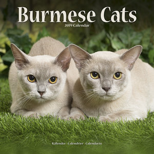 Calendrier 2019 Chats burmese