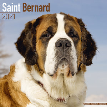 calendrier Saint Bernard 2021