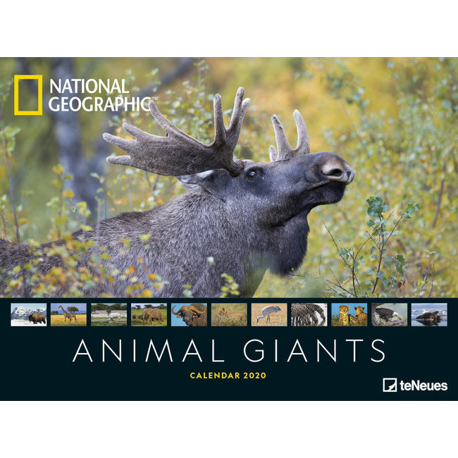 Calendrier National 2020.Maxi Calendrier Poster 2020 Animaux Geants Par National