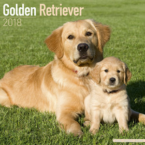 Calendrier 2018 Golden retriever