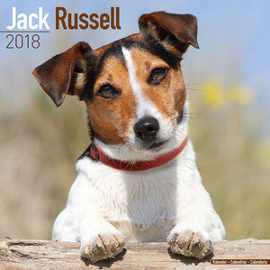 Calendrier 2018 Jack russell terrier