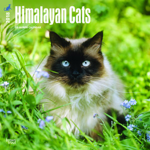 Calendrier 2018 Chat Himalayen colourpoint