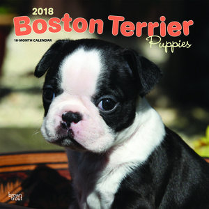 Calendrier 2018 Boston terrier chiot