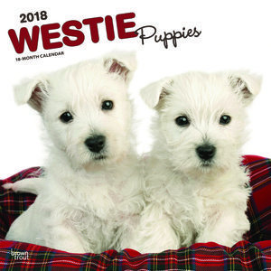 Calendrier 2018 Westie chiot