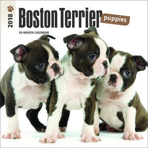 Mini calendrier 2018 Boston terrier chiot