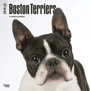 Calendrier 2018 Boston terrier