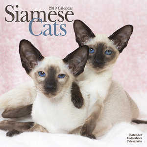 Calendrier 2019 Chat siamois
