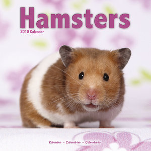 Calendrier 2019 Hamster