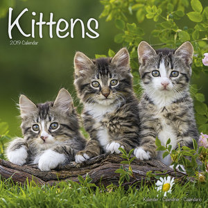 Calendrier 2019 Chatons