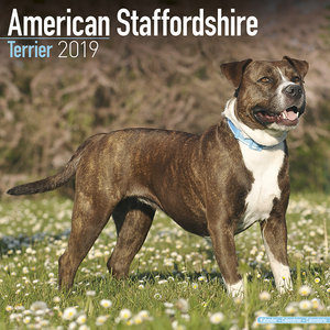Calendrier 2019 American staffordshire terrier