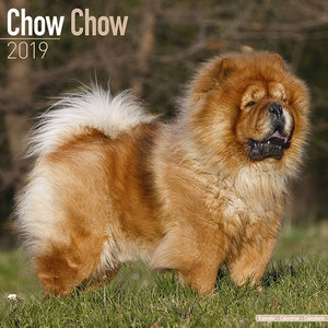 Calendrier 2019 Chow chow
