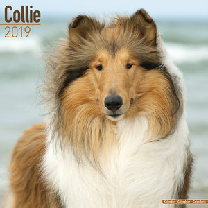 Calendrier 2019 Colley