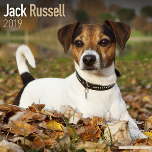 Calendrier 2019 Jack russell