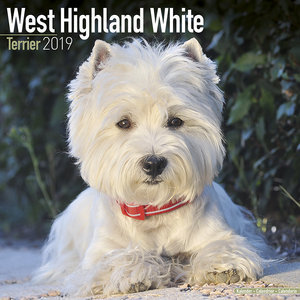 Calendrier 2019 West highland white terrier
