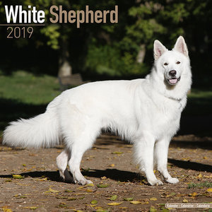 Calendrier 2019 Berger blanc suisse