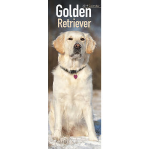 Calendrier 2019 Golden retriever slim