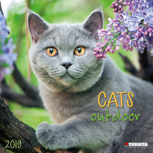 Calendrier 2019 Chat nature