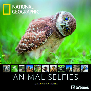 Calendrier 2019 National Geographic Animaux selfie