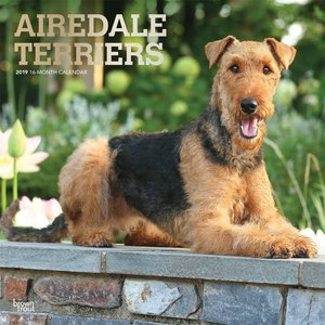 Calendrier 2019 Airedale terrier