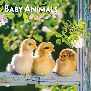 Calendrier 2019 bebes animaux