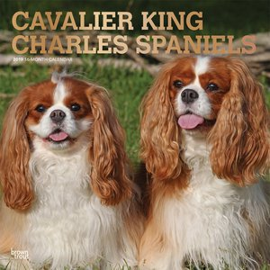 Calendrier 2019 Cavalier King Charles