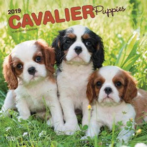 Calendrier 2019 Cavalier king charles chiot