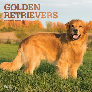 Calendrier 2019 Golden Retriever