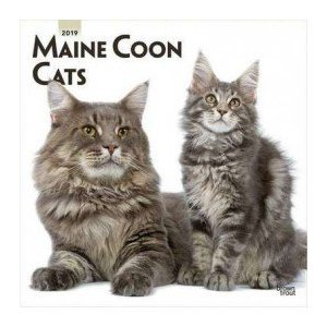 Calendrier 2019 Maine coon