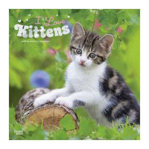 Calendrier 2019 J'aime les Chatons