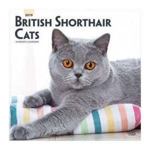 Calendrier 2019 British shorthair