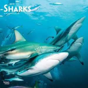 Calendrier 2019 Requin