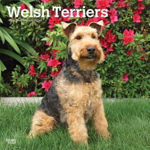 Calendrier 2019 Welsh terrier
