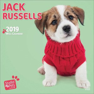 Calendrier 2019 Jack russell myrna